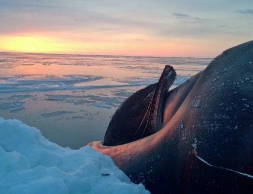 Upcoming Webinar: Climate Change and Health in the Arctic: Impacts on Alaska Native Communities and a Spotlight on Efforts to Improve Climate Health
